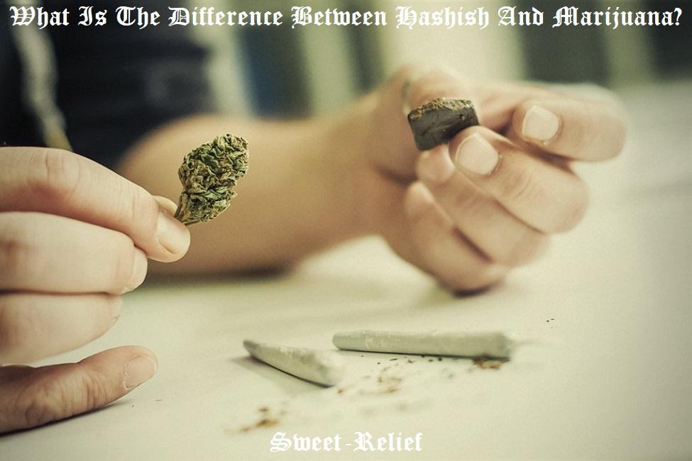 hash vs weed