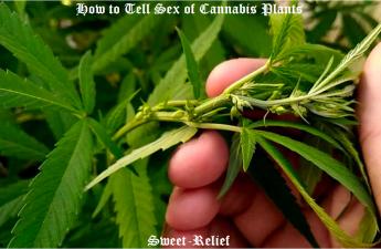 plant sex