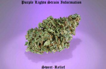 purple lights strain