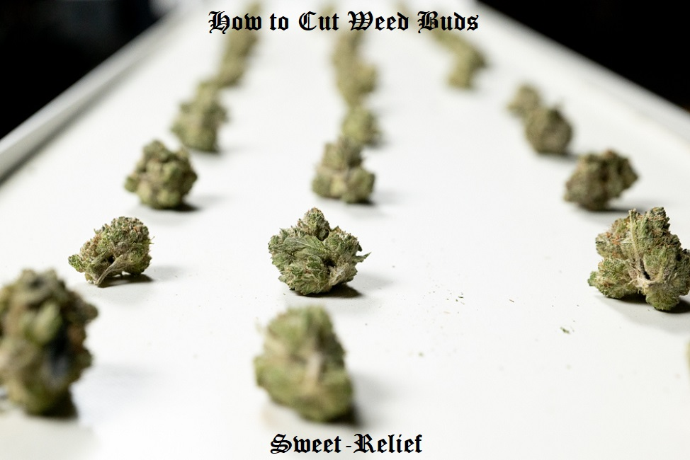 how to cut weed buds