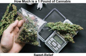 1 pound of cannabis